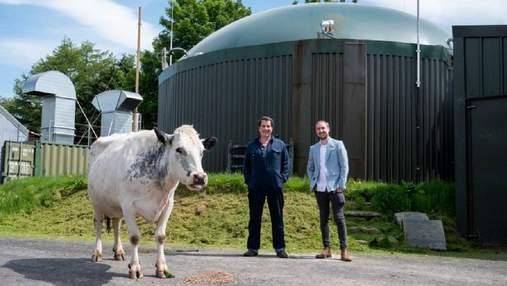 Криптовалюта и коровий навоз: оригинальное производство энергии для майнинга